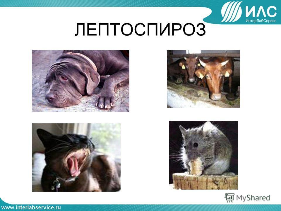 Лептофония