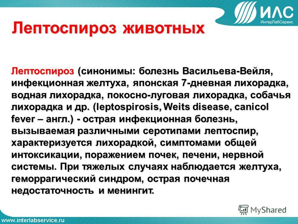 Лептоспироз животных Лептоспироз (синонимы: болезнь Васильева-Вейля, инфекционная желтуха, японская 7-дневная лихорадка, водная лихорадка, покосно-луговая лихорадка, собачья лихорадка и др. (leptospirosis, Weits disease, canicol fever – англ.) - остр