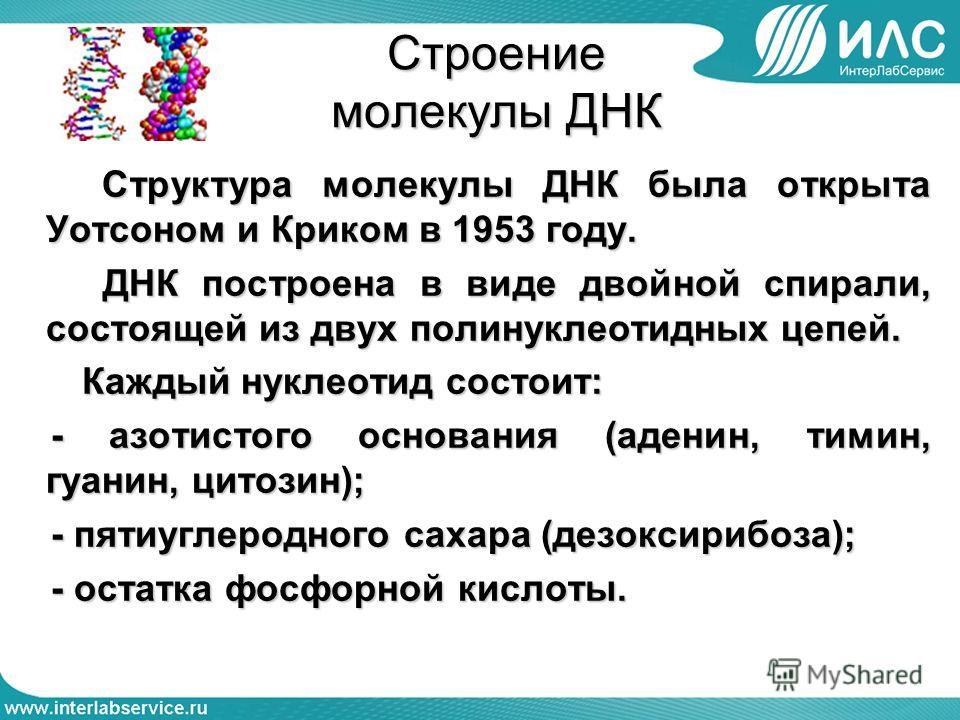Строение молекулы ДНК Структура молекулы ДНК была открыта Уотсоном и Криком в 1953 году. Структура молекулы ДНК была открыта Уотсоном и Криком в 1953 году. ДНК построена в виде двойной спирали, состоящей из двух полинуклеотидных цепей. ДНК построена