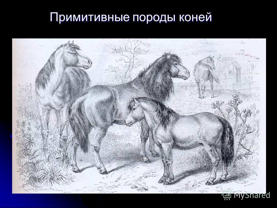 Примитивные породы коней