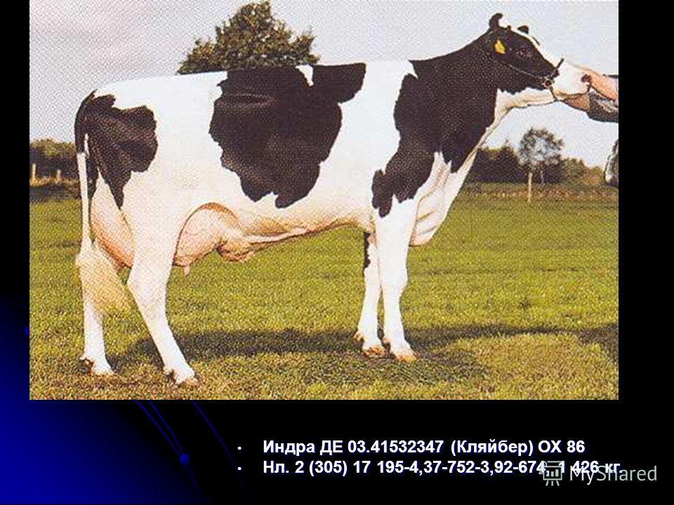 Индра ДЕ 03.41532347 (Кляйбер) ОХ 86 Индра ДЕ 03.41532347 (Кляйбер) ОХ 86 Нл. 2 (305) 17 195-4,37-752-3,92-674, 1 426 кг. Нл. 2 (305) 17 195-4,37-752-3,92-674, 1 426 кг.