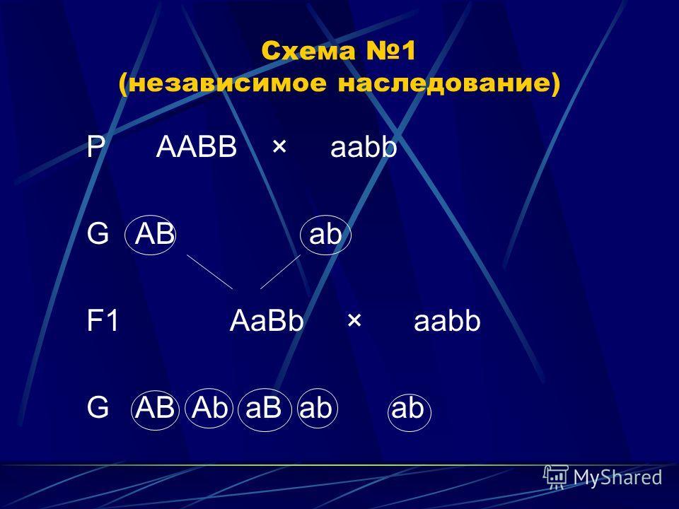 Схема 1 (независимое наследование) P ААBB × aabb G AB ab F1 AaBb × aabb G AB Ab aB ab ab