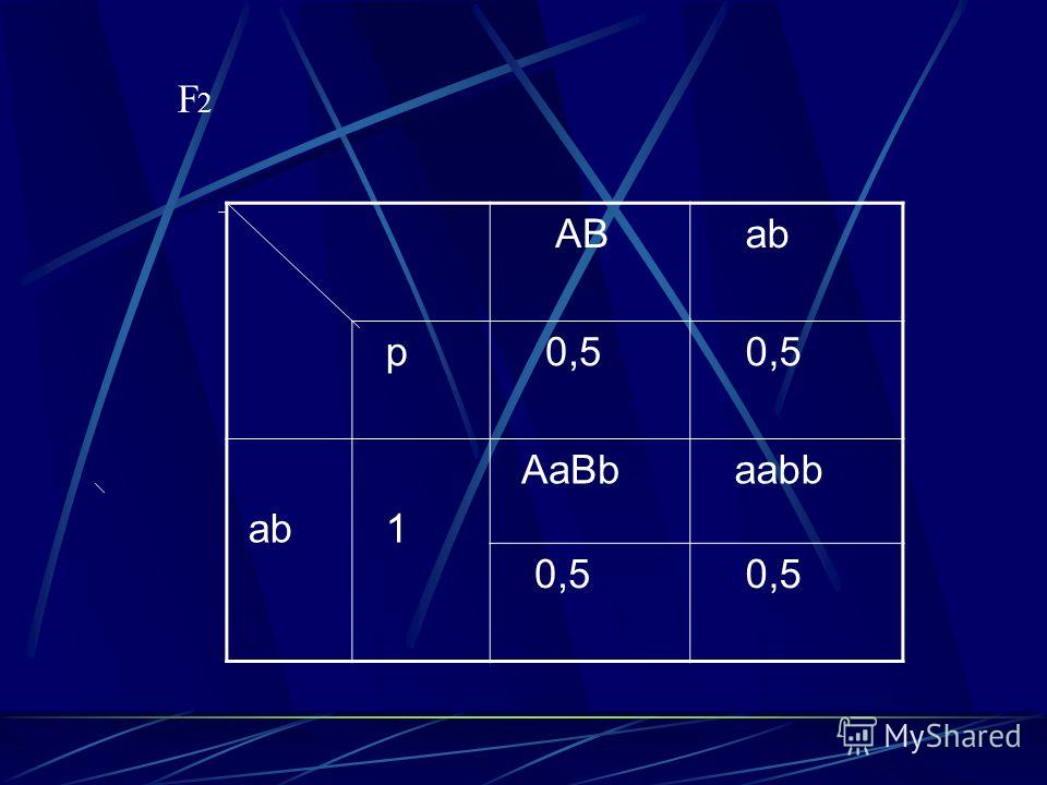 AB ab p 0,5 ab 1 AaBb aabb 0,5 F2 F2F2