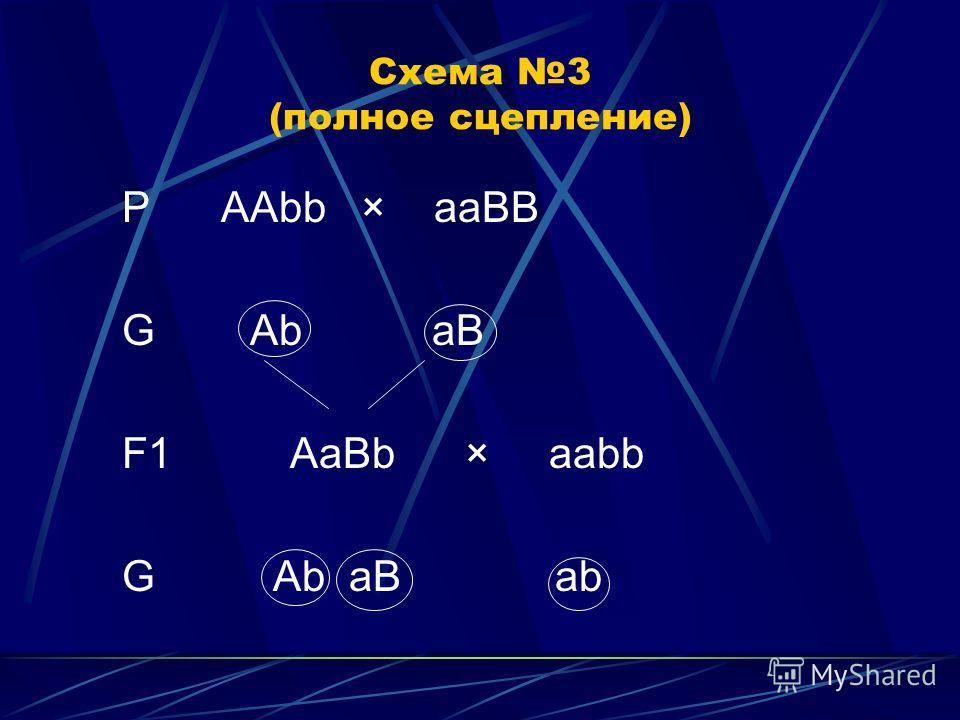 Схема 3 (полное сцепление) P ААbb × aaBB G Ab aB F1 AaBb × aabb G Ab aB ab