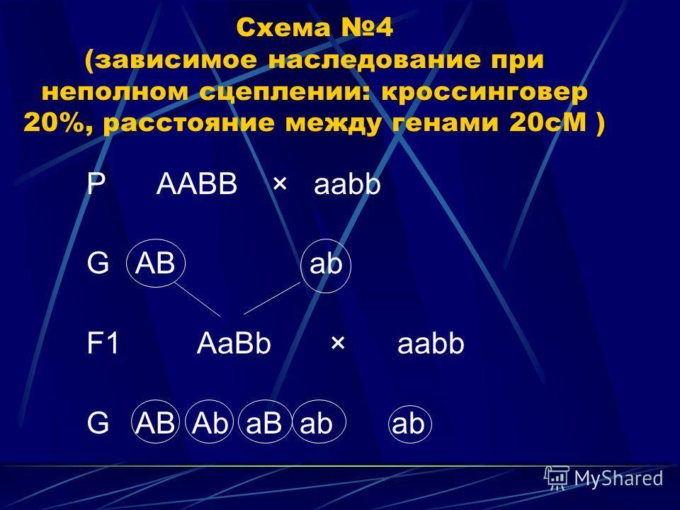 Схема 4 (зависимое наследование при неполном сцеплении: кроссинговер 20%, расстояние между генами 20сМ ) P ААBB × aabb G AB ab F1 AaBb × aabb G AB Ab aB ab ab
