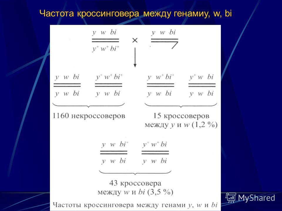 Частота кроссинговера между генамиy, w, bi