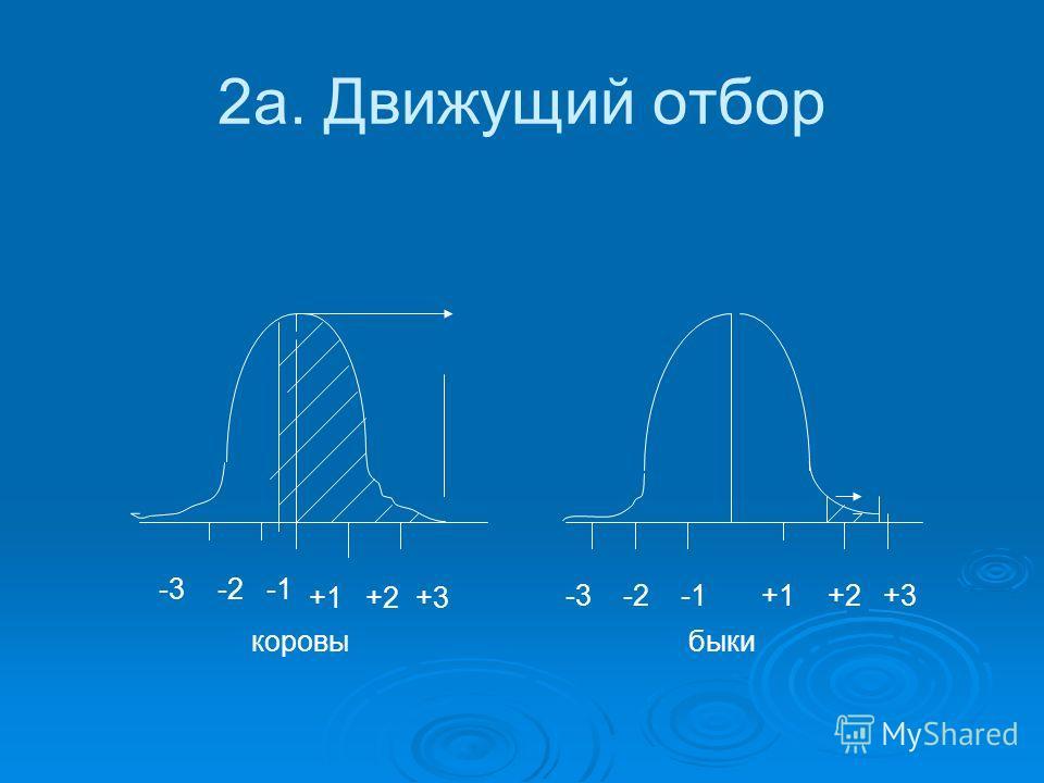 2а. Движущий отбор коровы быки -3 -2 -1 +1 +2 +3 -3 -2 -1 +1 +2 +3
