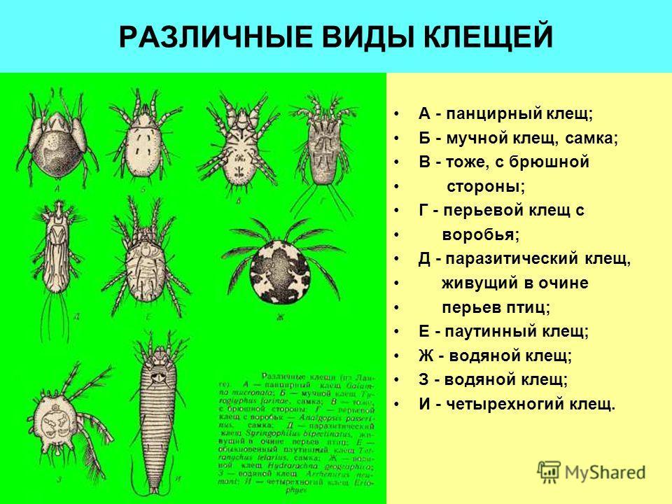 разновидности паразитов кишечнике человека
