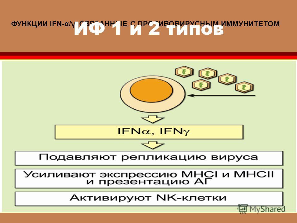 ФУНКЦИИ IFN-α/γ, СВЯЗАННЫЕ С ПРОТИВОВИРУСНЫМ ИММУНИТЕТОМ ИФ 1 и 2 типов