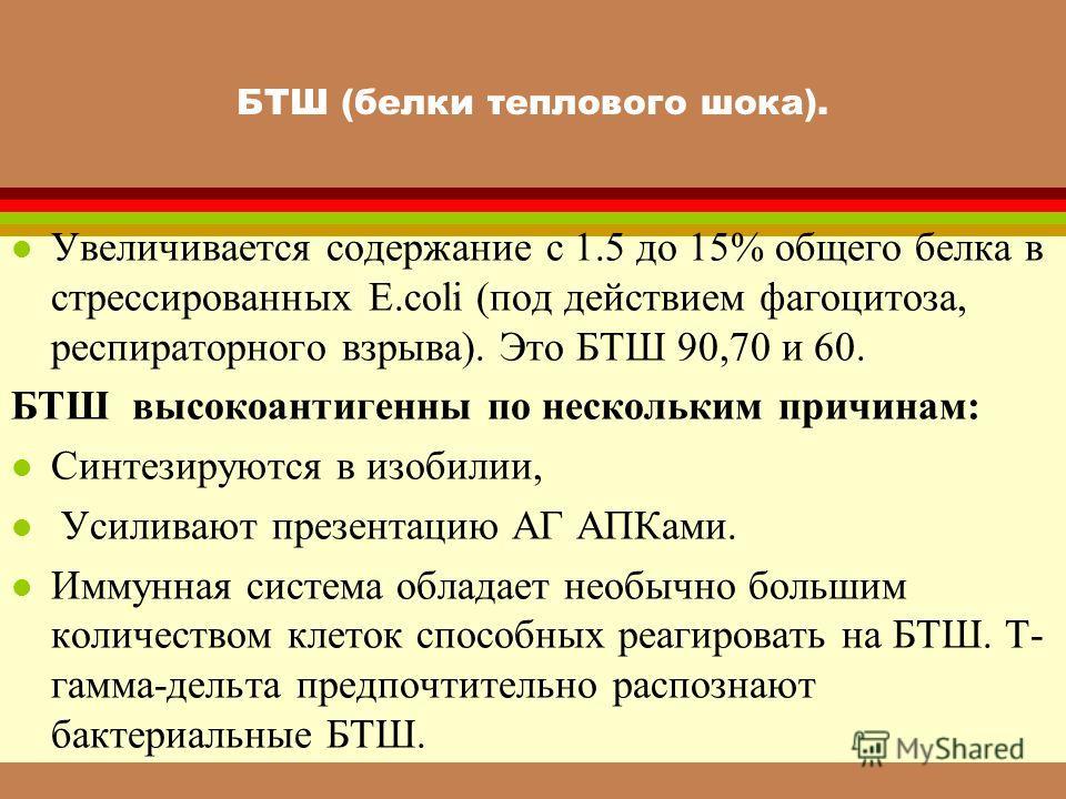 БТШ (белки теплового шока). l Увеличивается содержание с 1.5 до 15% общего белка в стрессированных E.coli (под действием фагоцитоза, респираторного взрыва). Это БТШ 90,70 и 60. БТШ высокоантигенны по нескольким причинам: l Синтезируются в изобилии, l