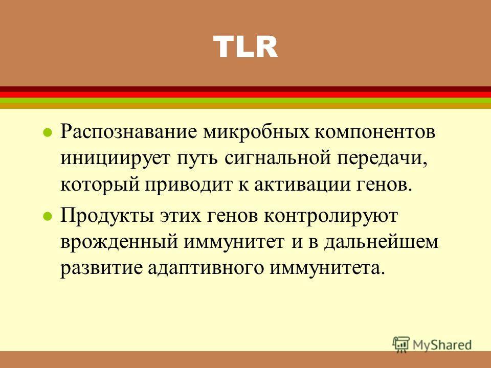 TLR l Распознавание микробных компонентов инициирует путь сигнальной передачи, который приводит к активации генов. l Продукты этих генов контролируют врожденный иммунитет и в дальнейшем развитие адаптивного иммунитета.