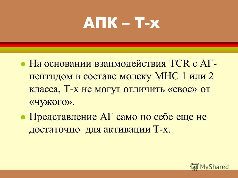 АПК – Т-х l На основании взаимодействия ТСR с АГ- пептидом в составе молеку МНС 1 или 2 класса, Т-х не могут отличить «свое» от «чужого». l Представление АГ само по себе еще не достаточно для активации Т-х.