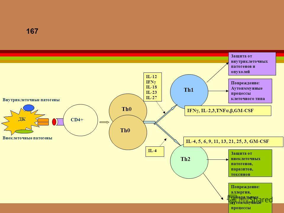 167 Th2 Th1 Повреждение: Аутоиммунные процессы клеточного типа Защита от внутриклеточных патогенов и опухолей Защита от внеклеточных патогенов, паразитов, токсинов Повреждение: аллергия, гуморальные аутоиммунные процессы IL-12 IFNγ IL-18 IL-23 IL-27