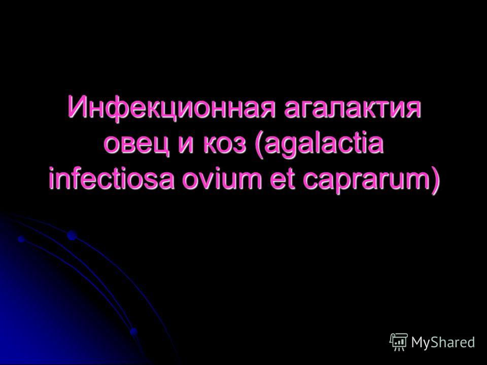 Инфекционная агалактия овец и коз (agalactia infectiosa ovium et caprarum)