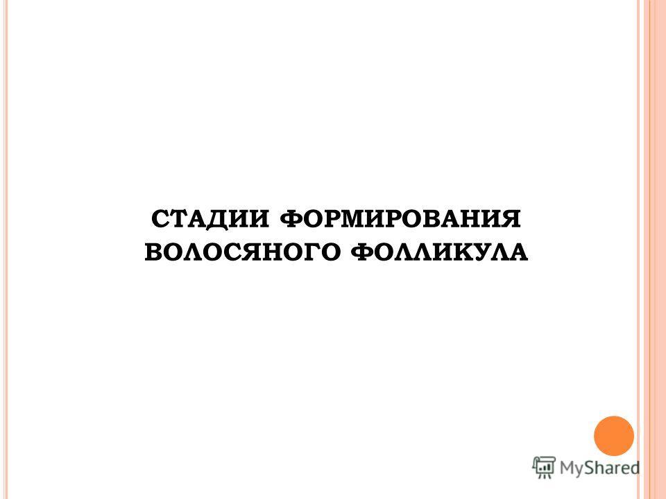 СТАДИИ ФОРМИРОВАНИЯ ВОЛОСЯНОГО ФОЛЛИКУЛА