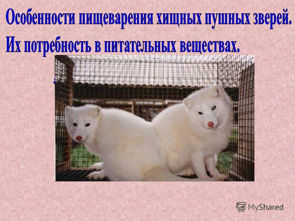Н.А. Балакирев академик РАСХН, профессор