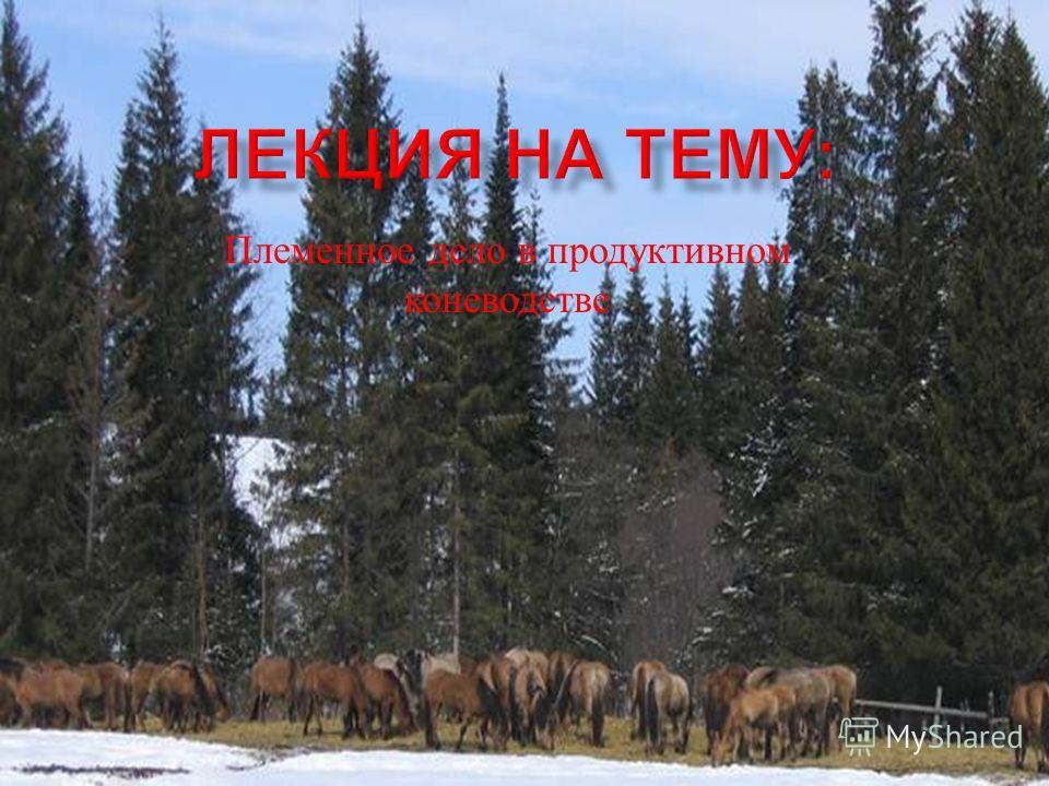 Племенное дело в продуктивном коневодстве