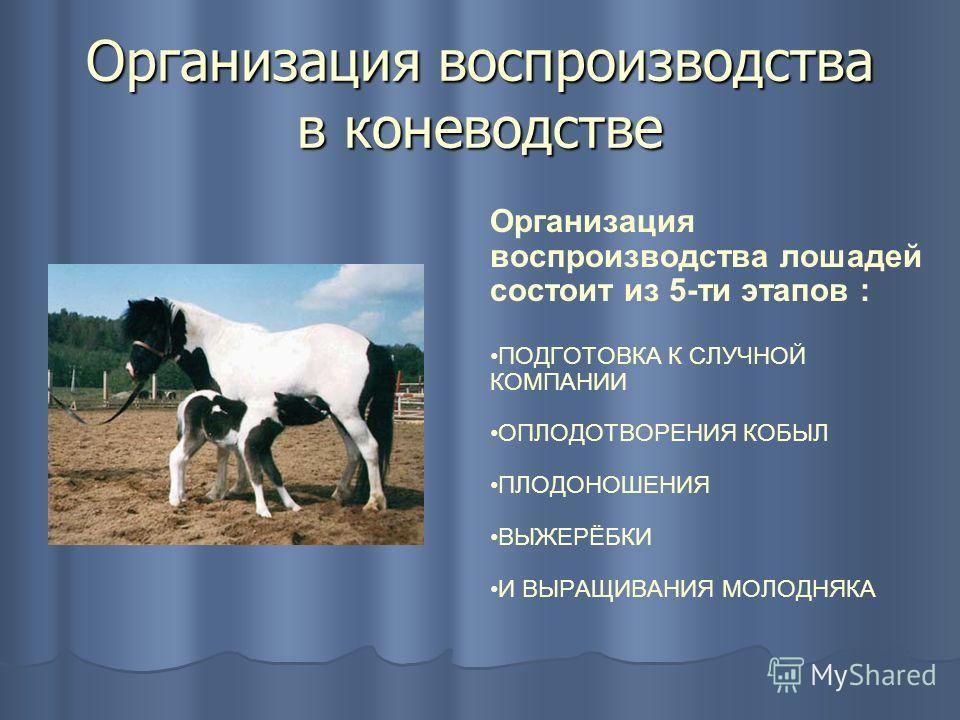Организация воспроизводства в коневодстве Организация воспроизводства лошадей состоит из 5-ти этапов : ПОДГОТОВКА К СЛУЧНОЙ КОМПАНИИ ОПЛОДОТВОРЕНИЯ КОБЫЛ ПЛОДОНОШЕНИЯ ВЫЖЕРЁБКИ И ВЫРАЩИВАНИЯ МОЛОДНЯКА
