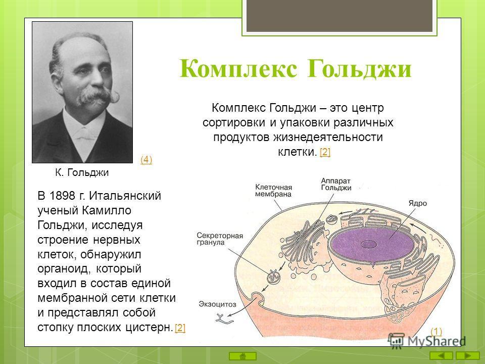 Комплекс Гольджи В 1898 г. Итальянский ученый Камилло Гольджи, исследуя строение нервных клеток, обнаружил органоид, который входил в состав единой мембранной сети клетки и представлял собой стопку плоских цистерн. Комплекс Гольджи – это центр сортир