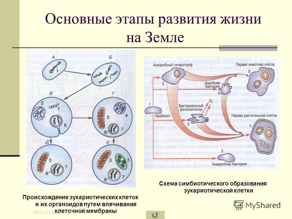 МОУ Основные этапы развития жизни на Земле