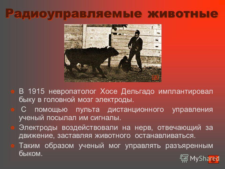 Радиоуправляемые животные Радиоуправляемые животные В 1915 невропатолог Хосе Дельгадо имплантировал быку в головной мозг электроды. С помощью пульта дистанционного управления ученый посылал им сигналы. Электроды воздействовали на нерв, отвечающий за