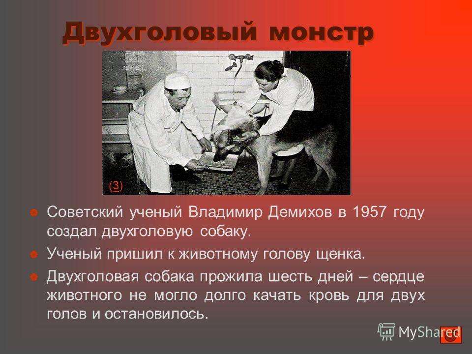 Двухголовый монстр Двухголовый монстр Советский ученый Владимир Демихов в 1957 году создал двухголовую собаку. Ученый пришил к животному голову щенка. Двухголовая собака прожила шесть дней – сердце животного не могло долго качать кровь для двух голов