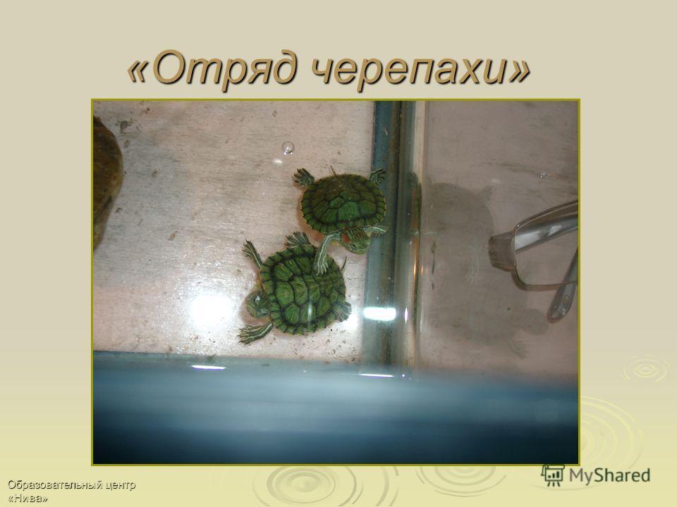 Образовательный центр «Нива» «Отряд черепахи»