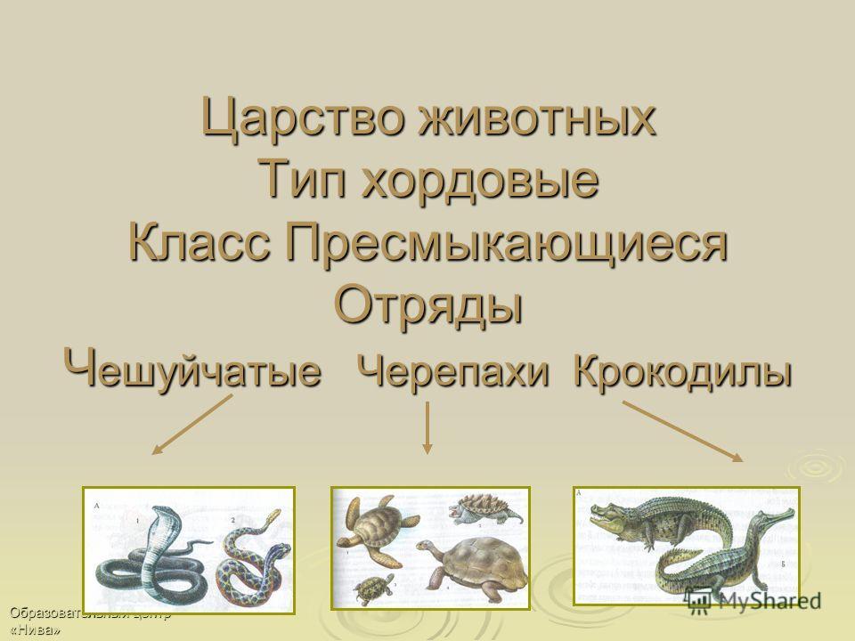 Образовательный центр «Нива» Царство животных Тип хордовые Класс Пресмыкающиеся Отряды Ч ешуйчатые Черепахи Крокодилы