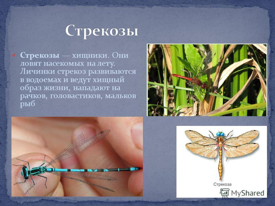 Примерно 70-75 % всех видов животных, населяющих Землю, представлены насекомыми. И сегодня ученые обнаруживают новые виды, большей частью тропические.