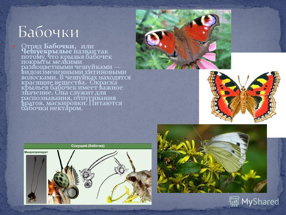 Отряд Жуки самый распространенный, включает более 300 тысяч видов. Отличительная особенность представителей данного отряда наличие жестких прочных над крыльев, прикрывающих вторую пару кожистых крыльев. Ротовой аппарат жуков грызущий. Среди жуков вст