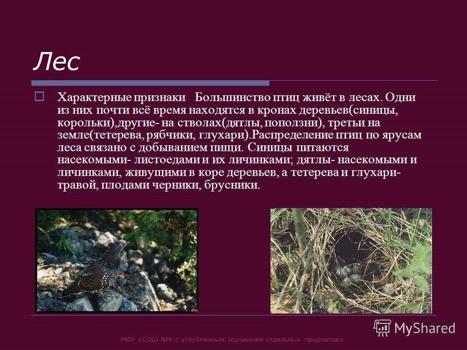 МОУ Лес Характерные признаки Большинство птиц живёт в лесах. Одни из них почти всё время находятся в кронах деревьев(синицы, корольки),другие- на стволах(дятлы, поползни), третьи на земле(тетерева, рябчики, глухари).Распределение птиц по ярусам леса