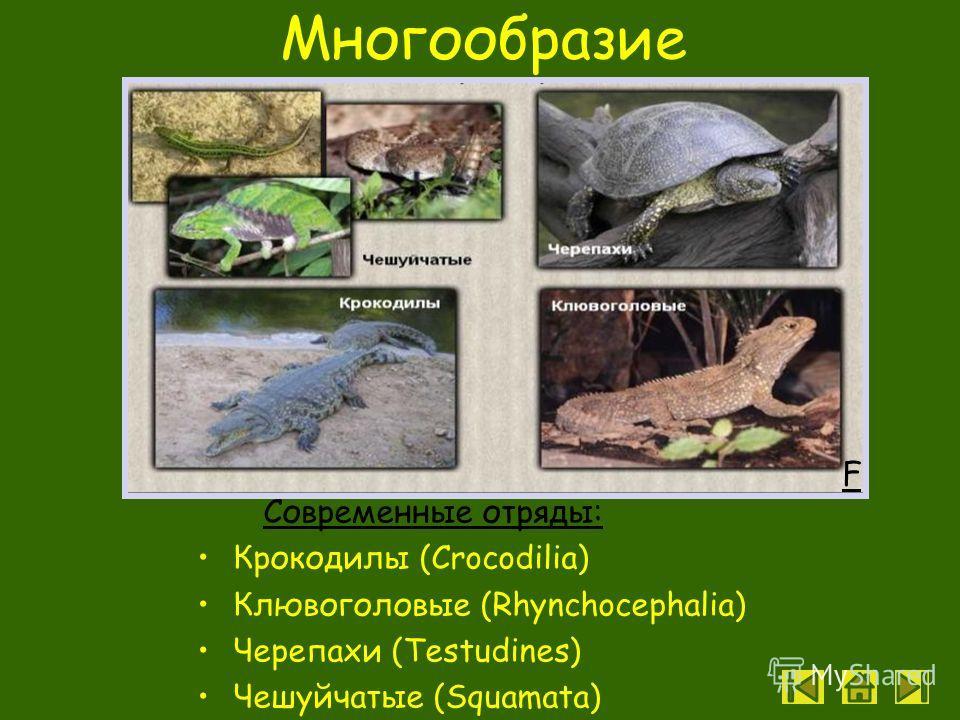 Размножение и развитие Появление черепашки из яйца L