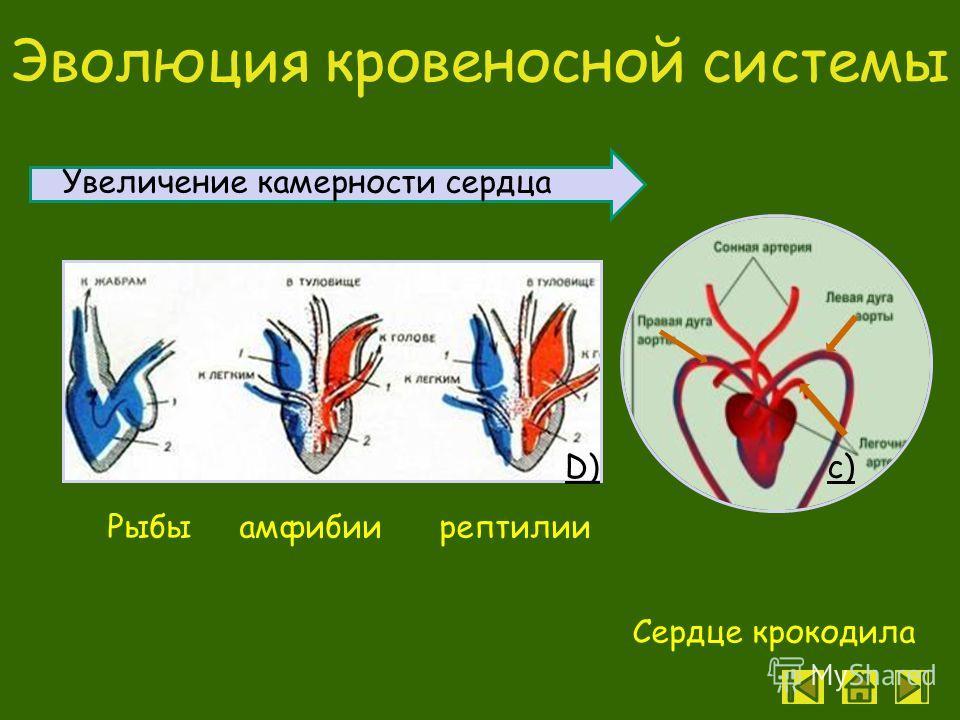 Скелет рептилий c)