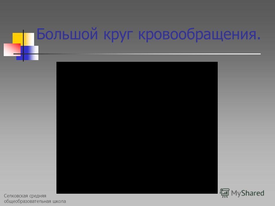Селковская средняя общеобразовательная школа Большой круг кровообращения.