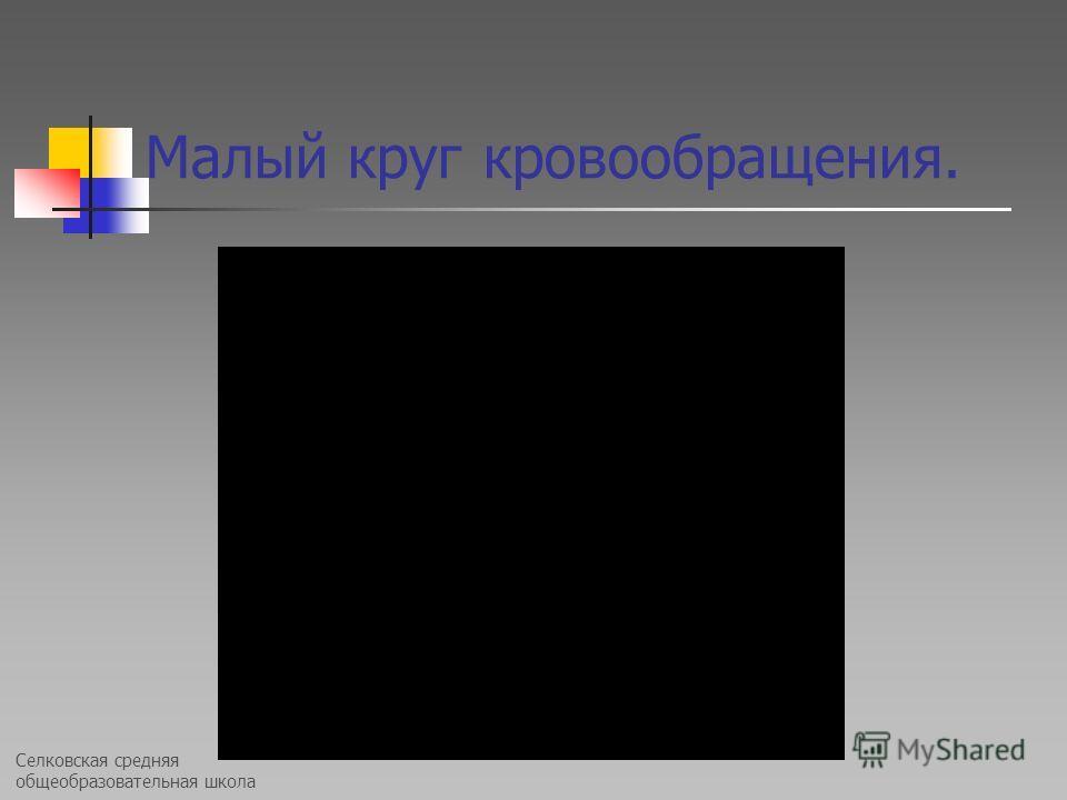 Селковская средняя общеобразовательная школа Малый круг кровообращения.