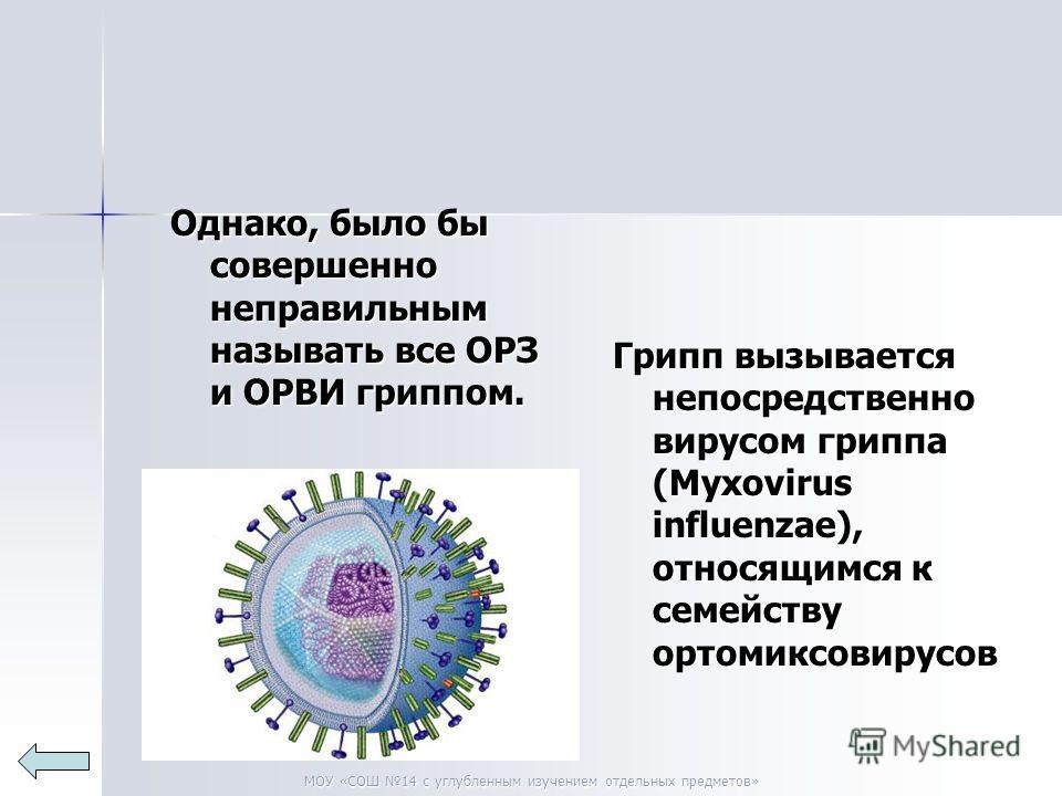 МОУ «СОШ 14 с углубленным изучением отдельных предметов» Однако, было бы совершенно неправильным называть все ОРЗ и ОРВИ гриппом. Грипп вызывается непосредственно вирусом гриппа (Myxovirus influenzae), относящимся к семейству ортомиксовирусов
