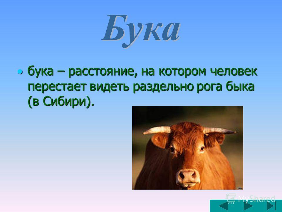 бука – расстояние, на котором человек перестает видеть раздельно рога быка (в Сибири). бука – расстояние, на котором человек перестает видеть раздельно рога быка (в Сибири).