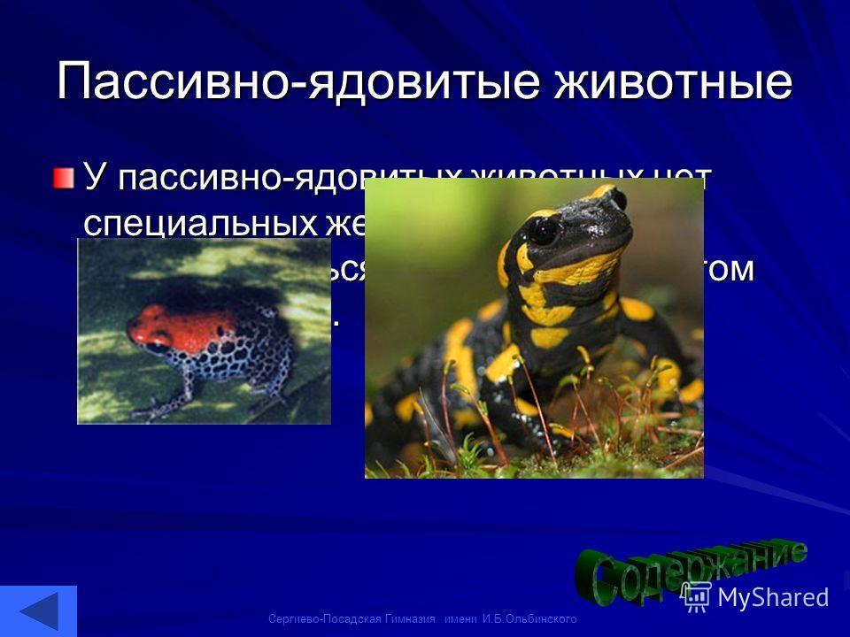 Сергиево-Посадская Гимназия имени И.Б.Ольбинского Пассивно-ядовитые животные У пассивно-ядовитых животных нет специальных желез. Яд может вырабатываться, например, секретом кожных желез.