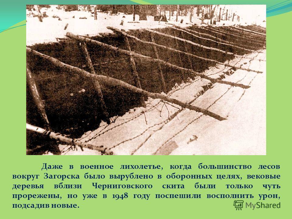 Даже в военное лихолетье, когда большинство лесов вокруг Загорска было вырублено в оборонных целях, вековые деревья вблизи Черниговского скита были только чуть прорежены, но уже в 1948 году поспешили восполнить урон, подсадив новые.