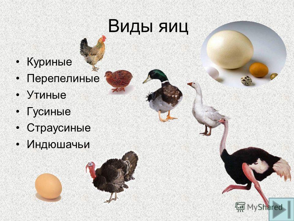 Виды яиц Куриные Перепелиные Утиные Гусиные Страусиные Индюшачьи