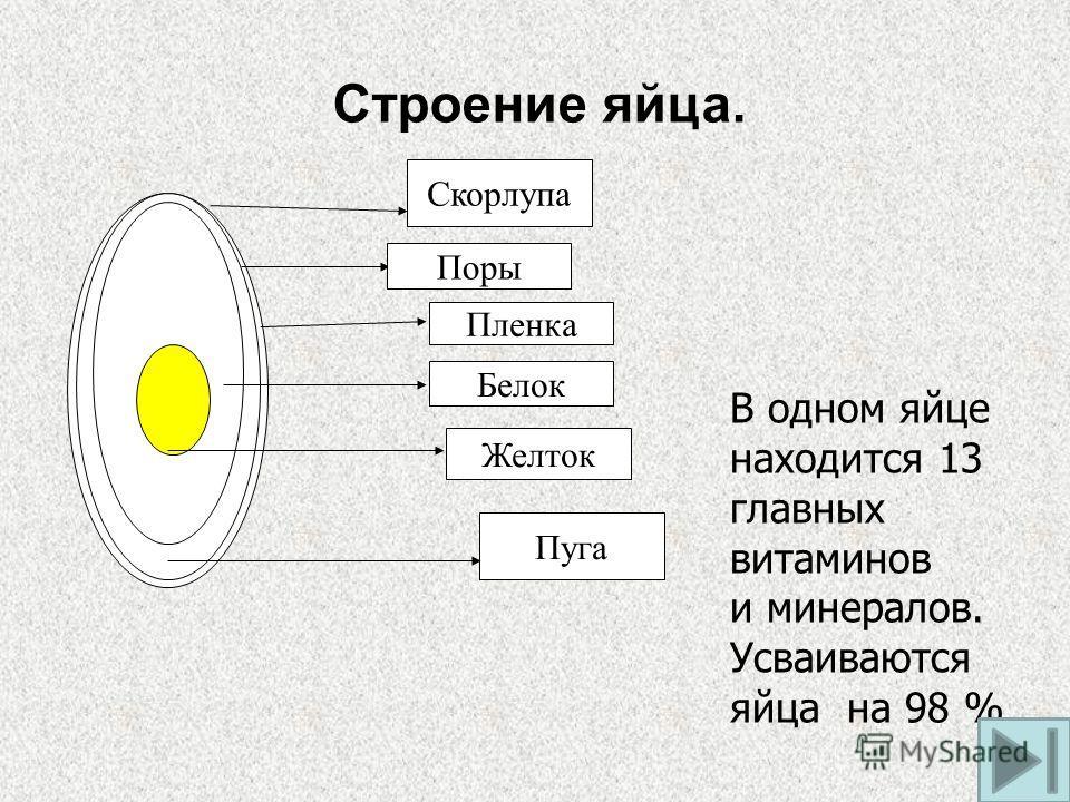 Скорлупа Поры Пленка Белок Желток Пуга Строение яйца. В одном яйце находится 13 главных витаминов и минералов. Усваиваются яйца на 98 %