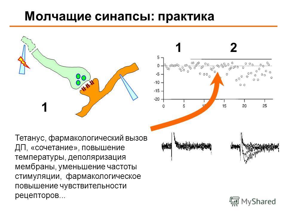 Молчащие синапсы: практика 12 1 Тетанус, фармакологический вызов ДП, «сочетание», повышение температуры, деполяризация мембраны, уменьшение частоты стимуляции, фармакологическое повышение чувствительности рецепторов...