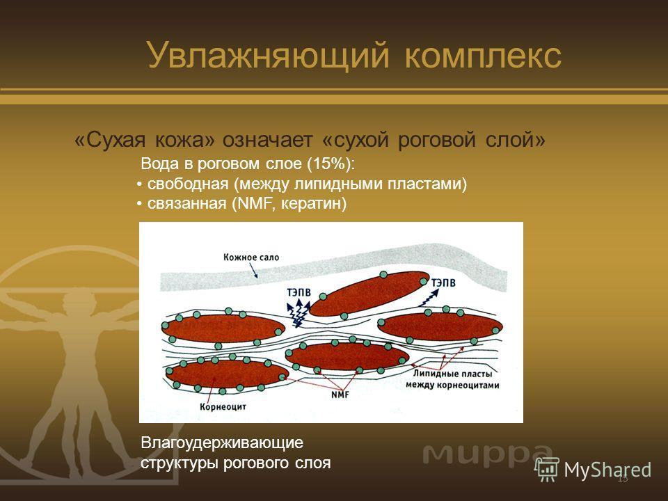15 Увлажняющий комплекс «Сухая кожа» означает «сухой роговой слой» Вода в роговом слое (15%): свободная (между липидными пластами) связанная (NMF, кератин) Влагоудерживающие структуры рогового слоя