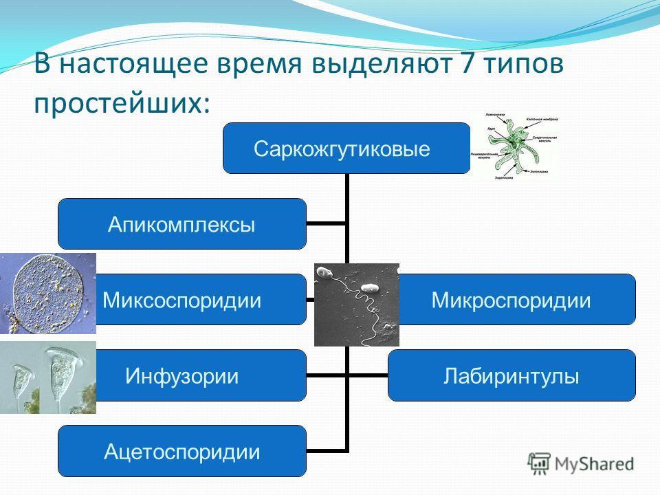 В настоящее время выделяют 7 типов простейших: Саркожгутиковые МиксоспоридииМикроспоридии ИнфузорииЛабиринтулы Ацетоспоридии Апикомплексы