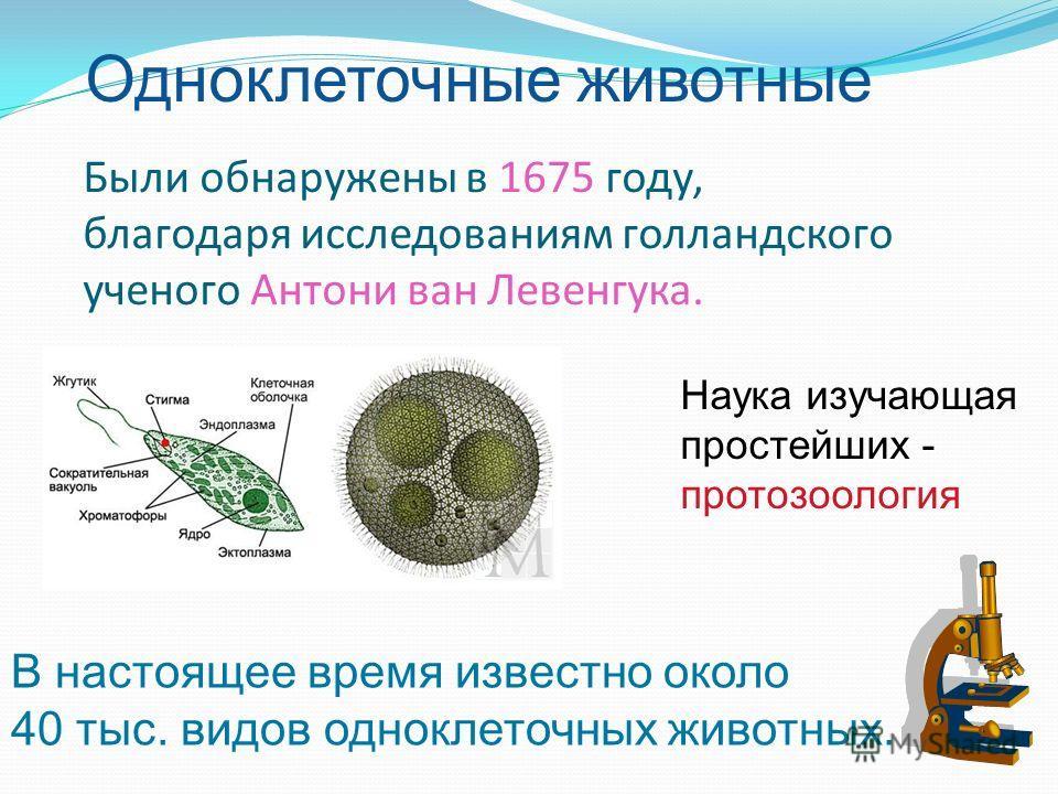 Были обнаружены в 1675 году, благодаря исследованиям голландского ученого Антони ван Левенгука. В настоящее время известно около 40 тыс. видов одноклеточных животных. Одноклеточные животные Наука изучающая простейших - протозоология
