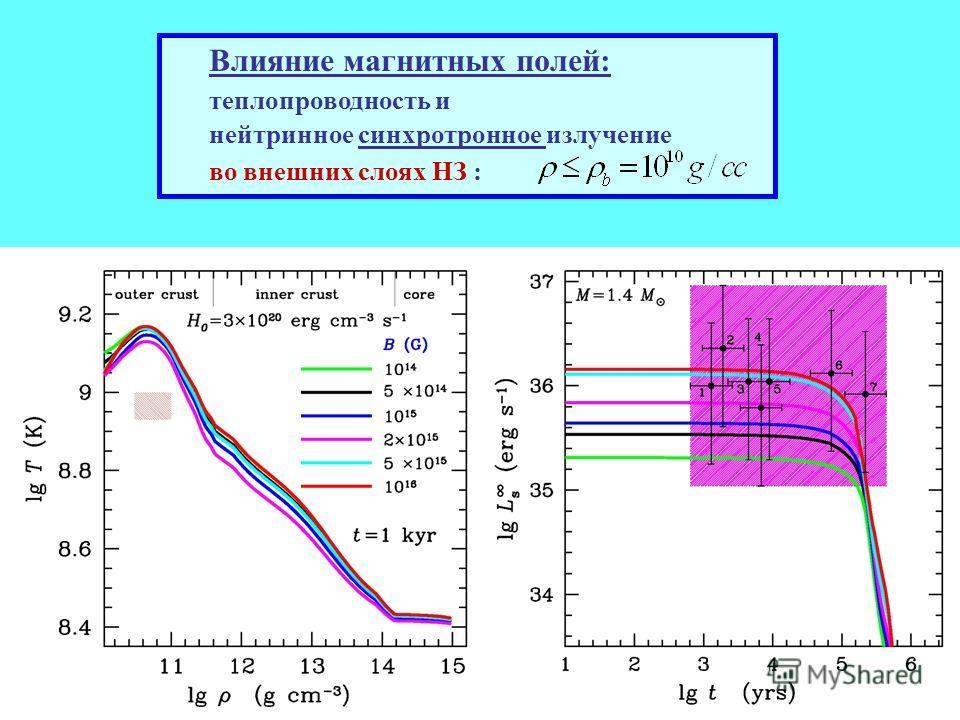 Влияние магнитных полей: теплопроводность и нейтринное синхротронное излучение во внешних слоях НЗ :