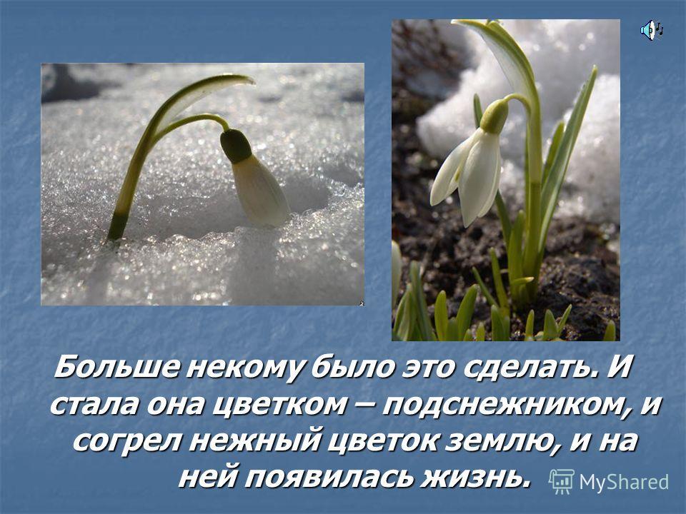 Больше некому было это сделать. И стала она цветком – подснежником, и согрел нежный цветок землю, и на ней появилась жизнь.