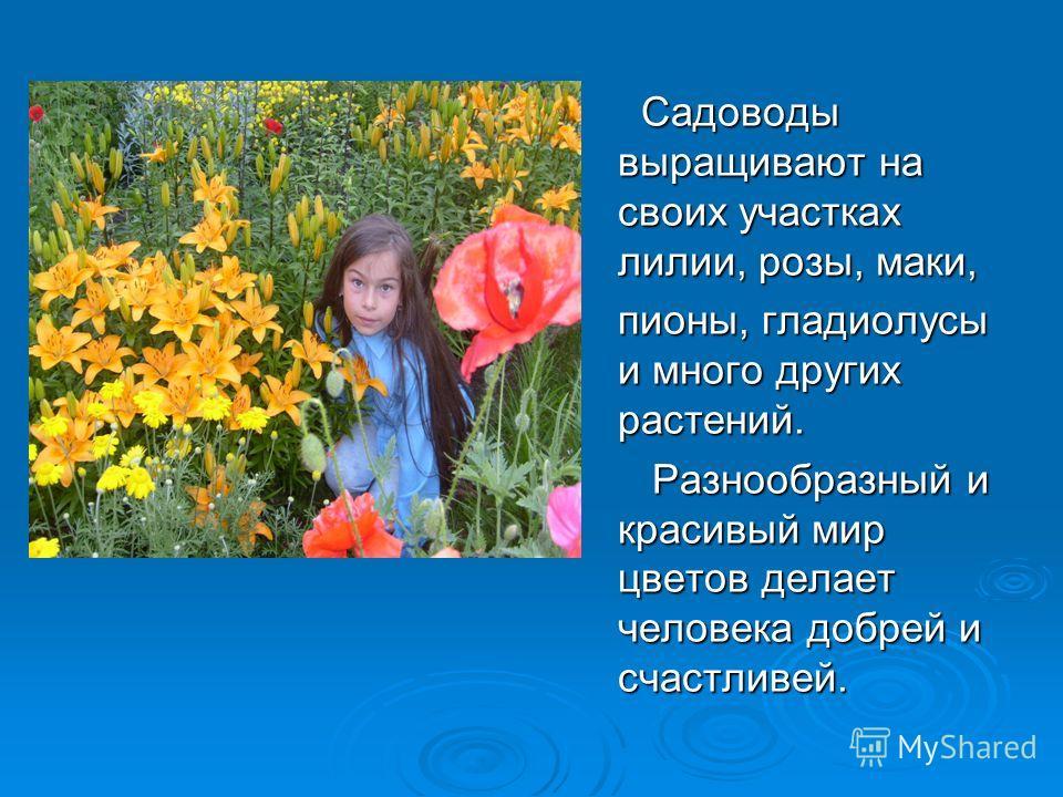 Садоводы выращивают на своих участках лилии, розы, маки, Садоводы выращивают на своих участках лилии, розы, маки, пионы, гладиолусы и много других растений. Разнообразный и красивый мир цветов делает человека добрей и счастливей. Разнообразный и крас