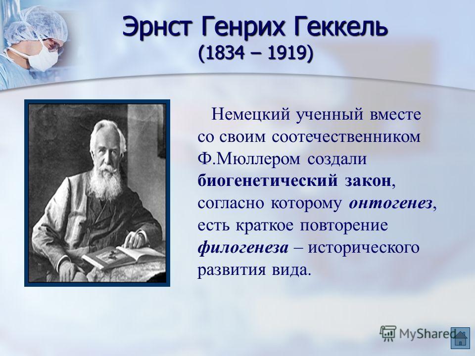Эрнст Генрих Геккель (1834 – 1919) Немецкий ученный вместе со своим соотечественником Ф.Мюллером создали биогенетический закон, согласно которому онтогенез, есть краткое повторение филогенеза – исторического развития вида.