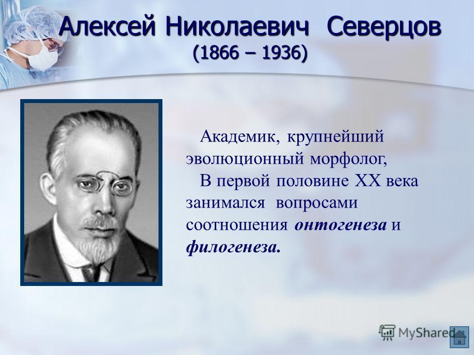 Алексей Николаевич Северцов (1866 – 1936) Академик, крупнейший эволюционный морфолог, В первой половине XX века занимался вопросами соотношения онтогенеза и филогенеза.